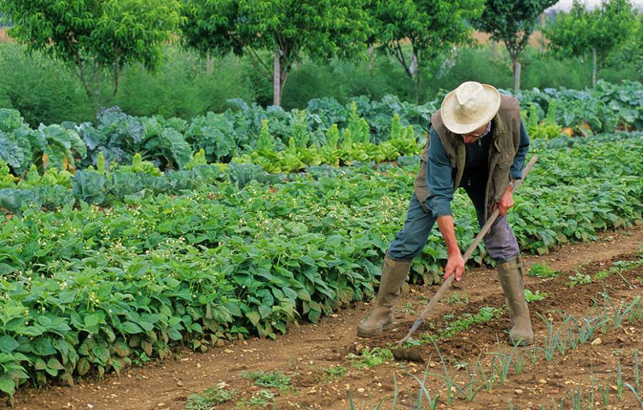 plantation automne potager