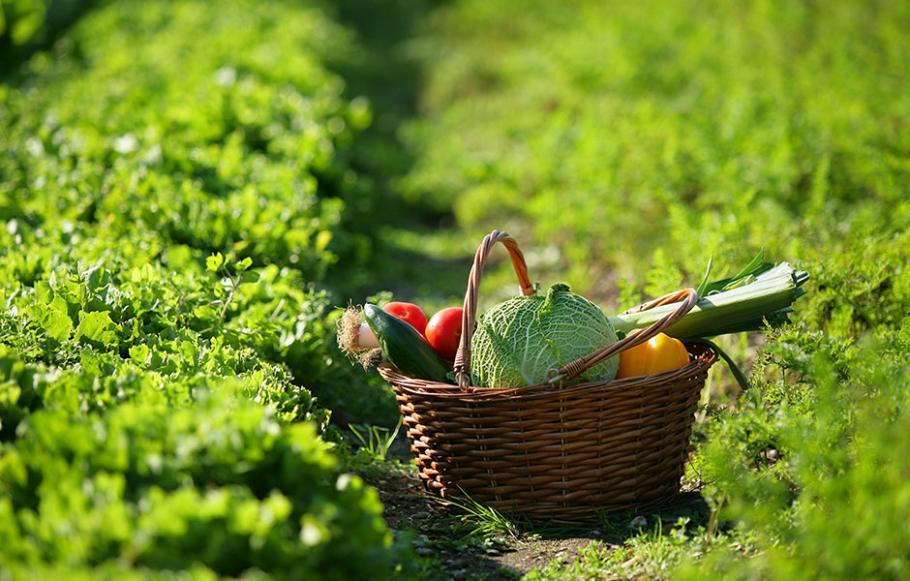 Quand planter l'ail et l'échalote ? | Gamm vert