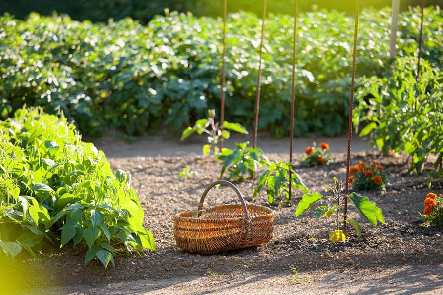 Calendrier Plantations Potager.Jardin En Mars Calendrier Du Potager Gamm Vert