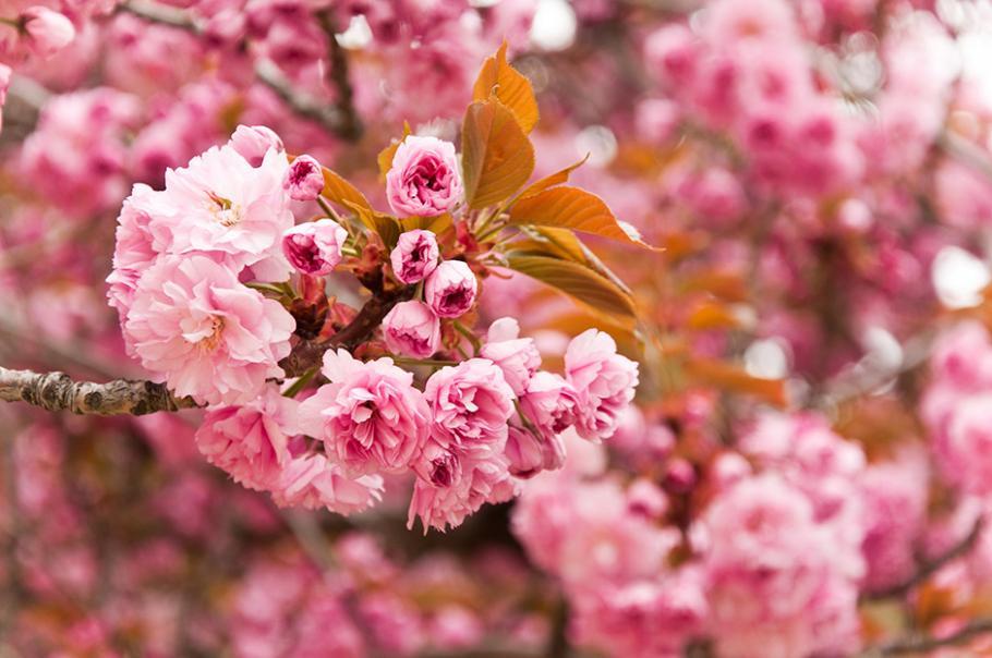 10 superbes arbustes pour fêter le printemps