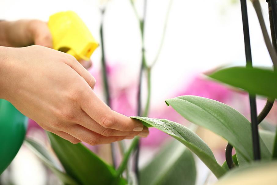 Choisir Les Produits Pour Prendre Soin De Ses Orchidees Gamm Vert
