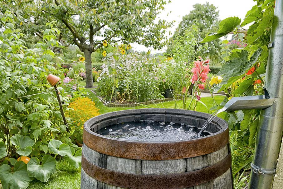 Une réserve d\'eau dans le jardin | Gamm vert