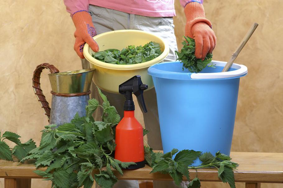 Comment faire son purin d 39 ortie gamm vert - Comment faire du purin d ortie ...