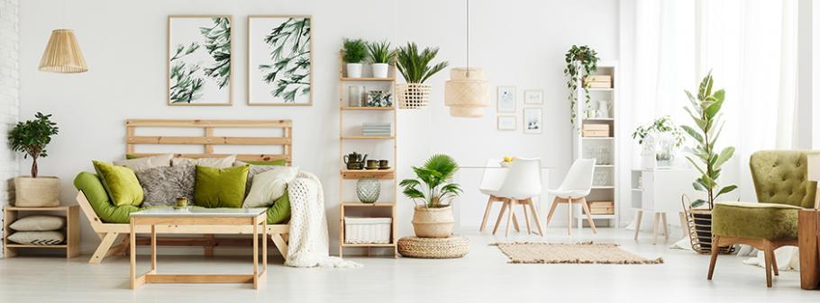 Choisir ses plantes d\'intérieur en fonction de la pièce de ...