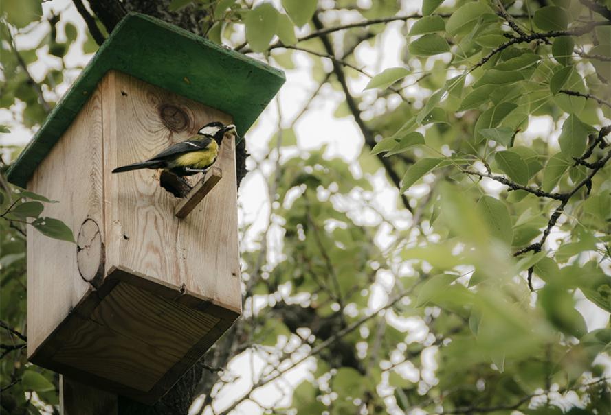 choisir un nichoir pour les oiseaux du jardin gamm vert. Black Bedroom Furniture Sets. Home Design Ideas