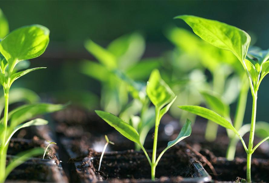Calendrier Plantations Potager.Calendrier Des Semis Au Potager Gamm Vert