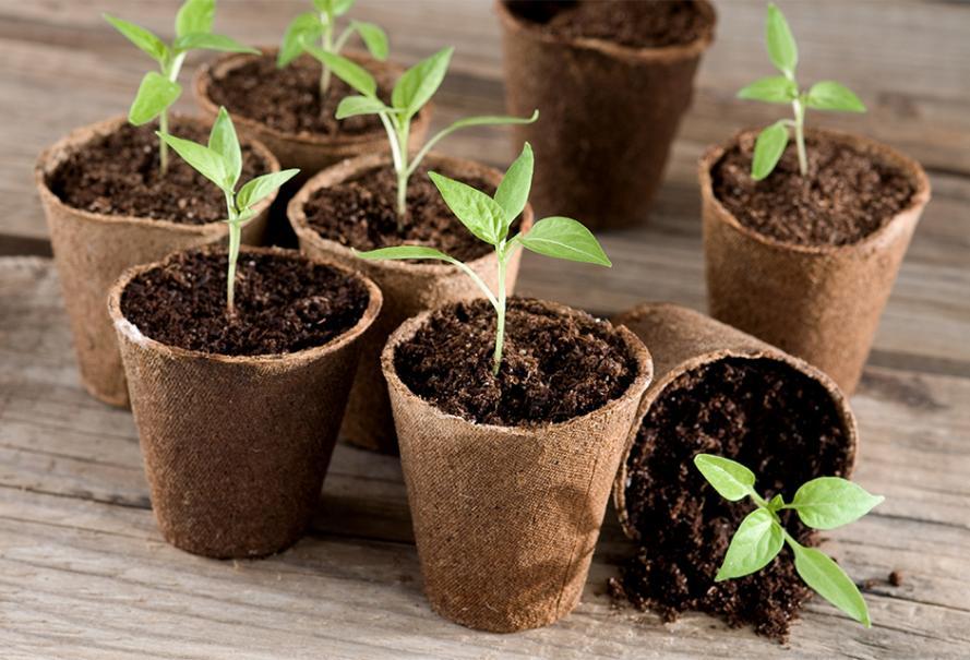 jardin en f vrier calendrier du potager gamm vert. Black Bedroom Furniture Sets. Home Design Ideas