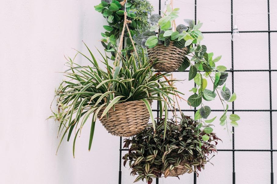 13 Plantes D Interieur Increvables Gamm Vert