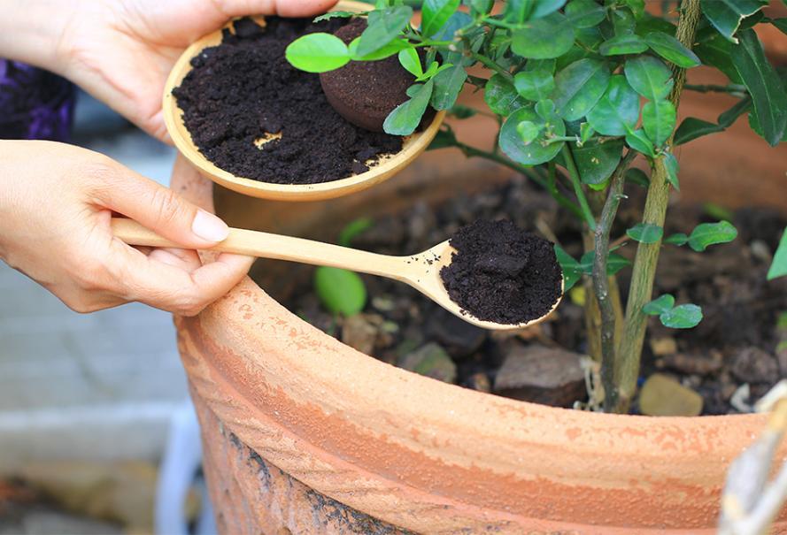 Idée de récup numéro 10 : Du marc de café pour mes plantes | Gamm vert