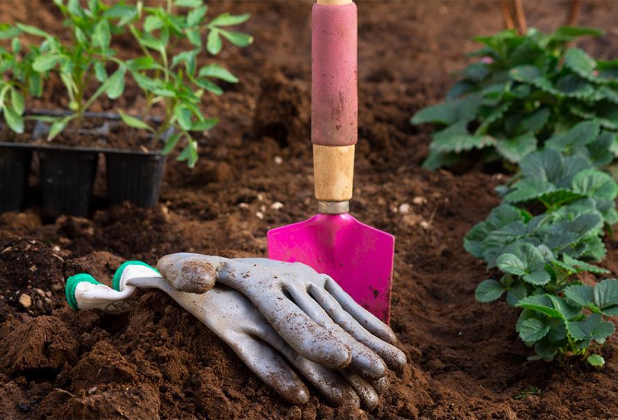 Que Planter Au Mois De Mars Gamm Vert