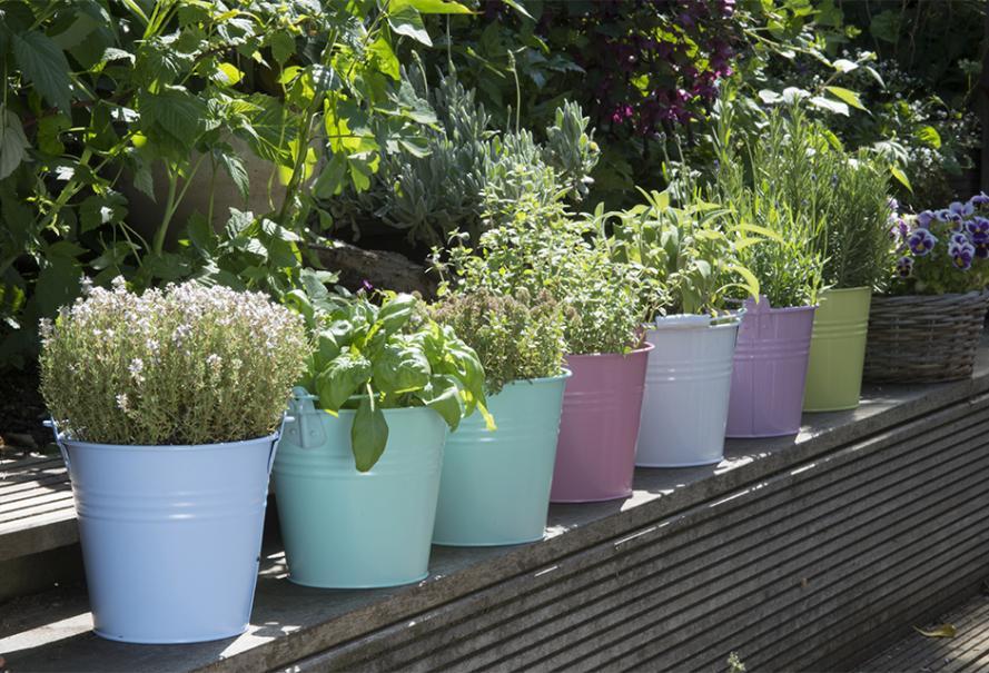 Planter Les Plantes Aromatiques Gamm Vert