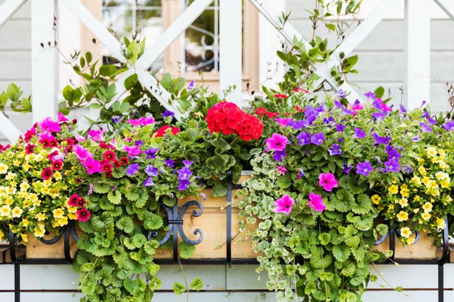Recettes pour potées fleuries d'été