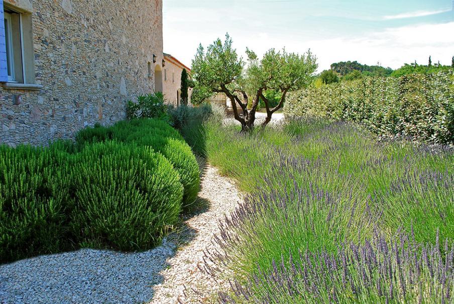 Mariez les plantes du sud : oliviers, lavandes... | Gamm vert