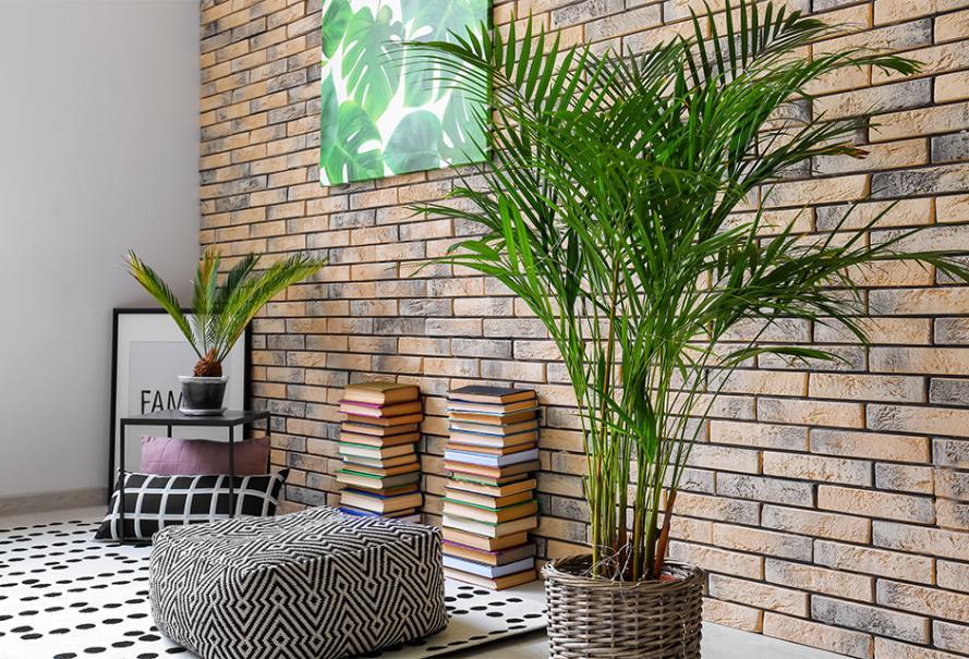 Palmiers Graines fleurs en pot chambre Plante Serre Jardin d/'Hiver Nain Palme