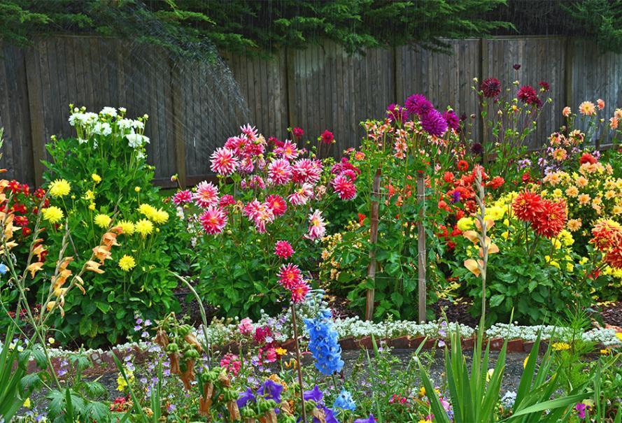 Coloriage Fleurs Bulbe.Planter Et Cultiver Les Bulbes D Ete Dahlia Canna Glaieul Lis