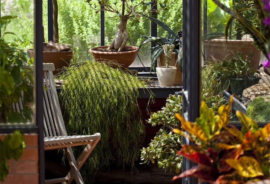 Choisir ses plantes d'intérieur pour la véranda et la serre | Gamm vert