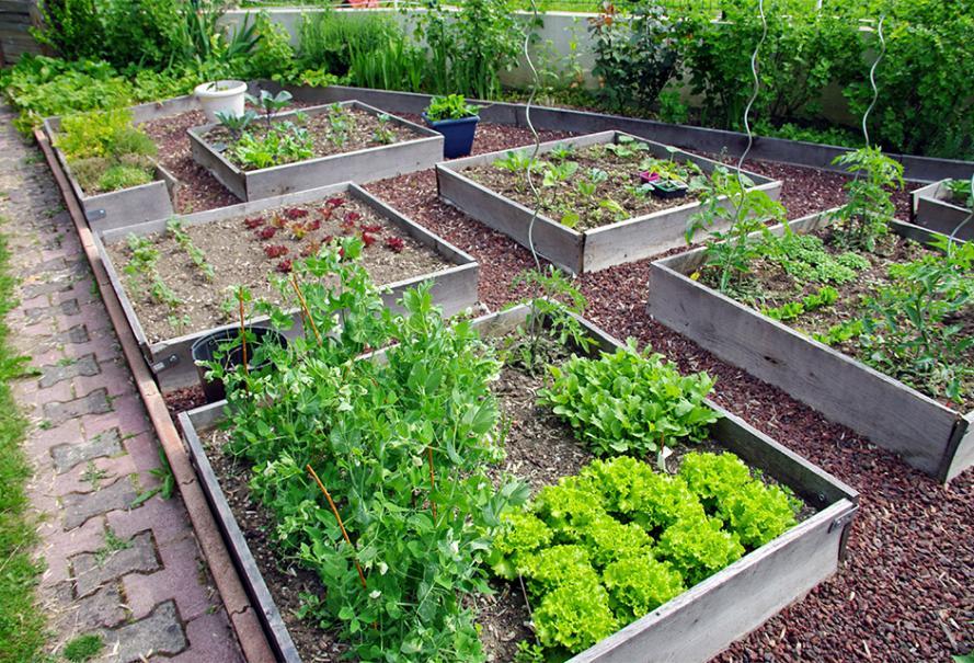 Comment fabriquer un carr potager gamm vert - Comment faire un beau jardin potager ...