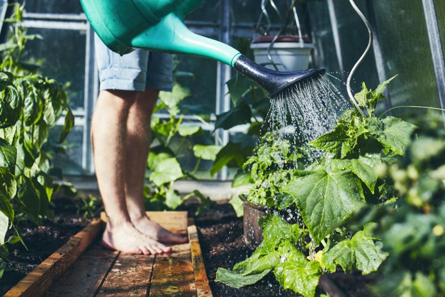 Quel Arrosage Dans La Serre De Jardin Gamm Vert