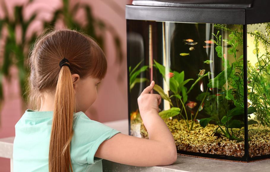Aquarium Pour Poissons Gamm Vert