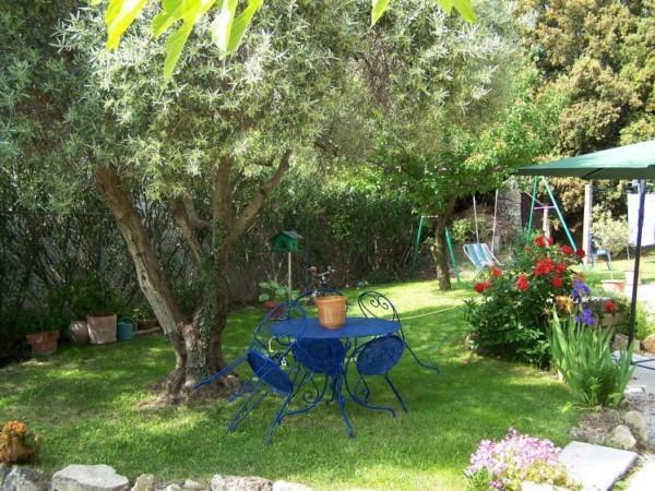 Plantation d un olivier en pleine terre interesting tout savoir sur luolivier un arbre immortel - Entretien d un olivier ...