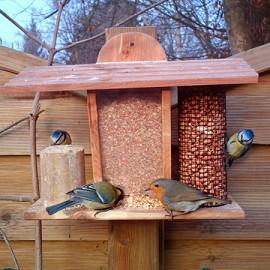 Choisir les mangeoires des oiseaux du jardin le magazine gamm vert for Comfabriquer cabane oiseau