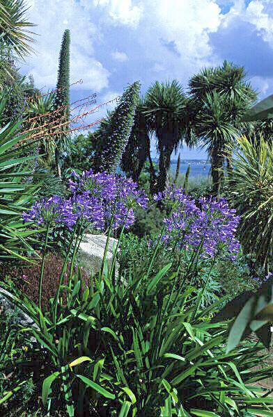 Misez sur l 39 exotisme avec les plantes australes le for Conseil sur les plantes