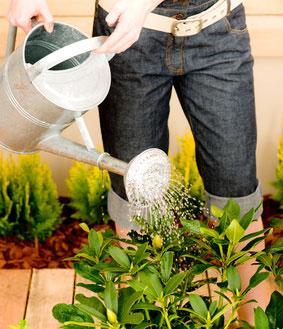 Que faire sur le balcon ou la terrasse en juin gamm vert for Travaux de jardinage