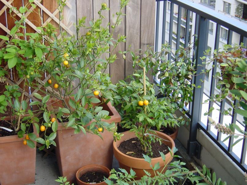 Que faire sur le balcon ou la terrasse en avril gamm vert - Conseils jardinage pour les plantes en pots ...