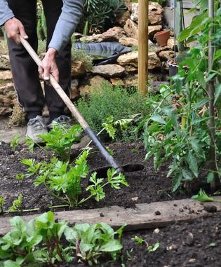 Jardin en mars calendrier du potager gamm vert - Que planter en aout au potager ...