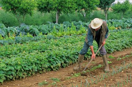 Que faire au potager en octobre le magazine gamm vert for Site de jardinage en ligne