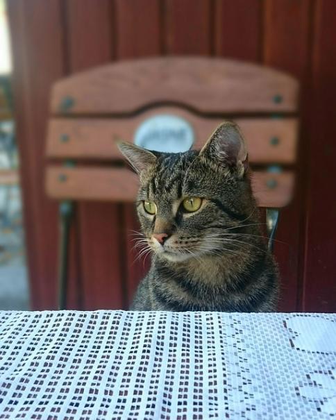 mon chat ne monte pas sur la table | le magazine — gamm vert