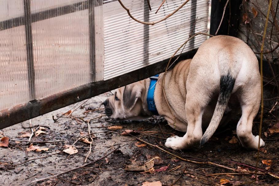 Sécuriser le jardin pour votre chien | Gamm vert