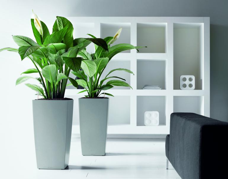 rempoter le spathiphyllum gamm vert. Black Bedroom Furniture Sets. Home Design Ideas