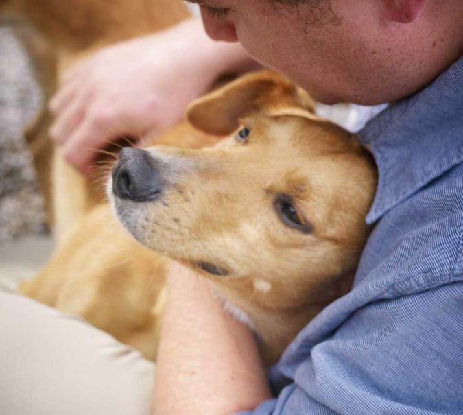 Consacrer du temps à son chien   Le Magazine — Gamm vert