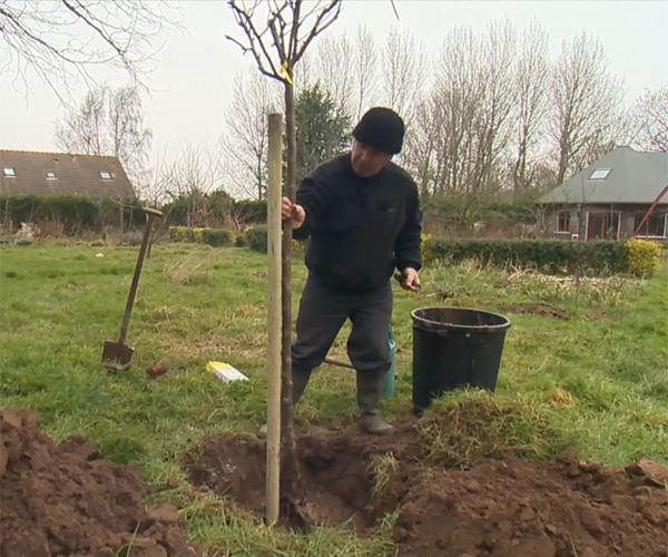 Planter un prunus le cerisier fleurs galement appel cerisier du japon ou prunus est un trs bel - Comment tailler un mirabellier ...
