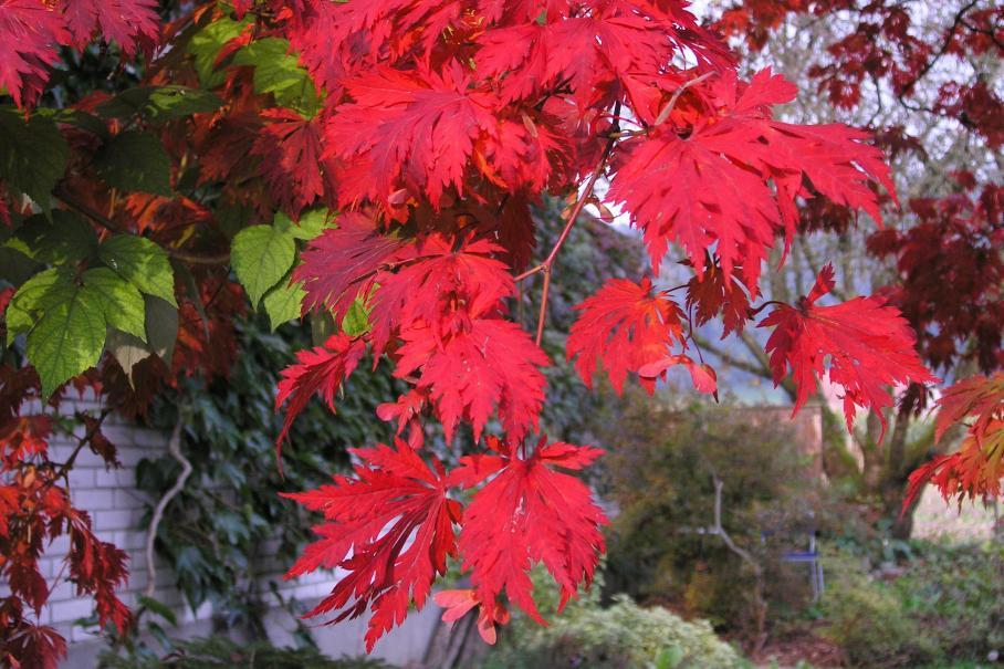 Que faire au jardin d\'ornement en octobre ? | Gamm vert