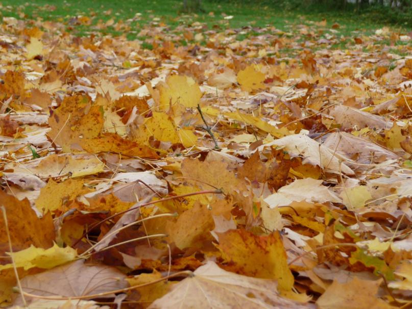 Les feuilles l 39 or du jardinier gamm vert for Conseil du jardinier