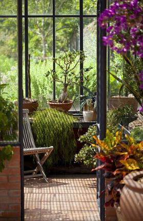 Cultiver des fleurs sous serre   Gamm vert