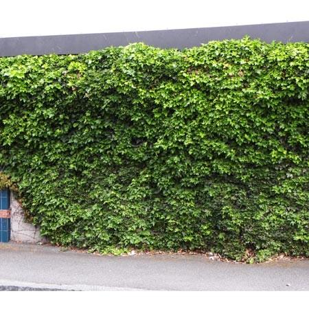 Planter Le Lierre Gamm Vert