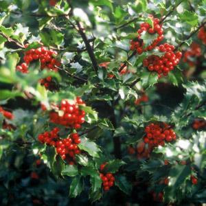 Les plantes dangereuses au jardin et dans la maison le for Au jardin info plantes