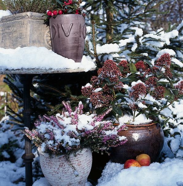 De nouvelles jardini res d 39 automne et d 39 hiver gamm vert - Jardiniere automne hiver ...