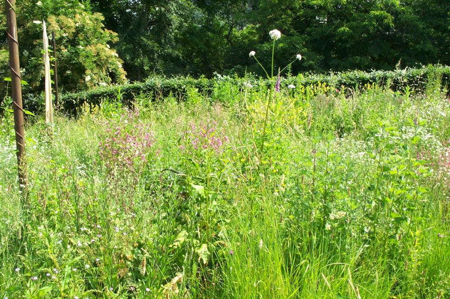 Sus aux mauvaises herbes le magazine gamm vert for Conseil sur les plantes