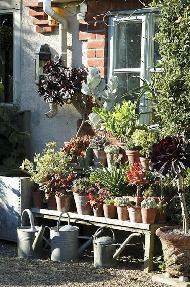 Installez vos cact es et plantes grasses au jardin le for Plantes jardiniere plein soleil