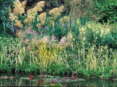 Au bord d 39 un bassin d 39 une mare gamm vert - Plantation autour d un bassin ...