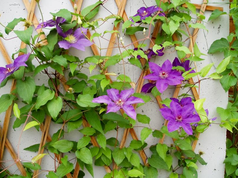 Treillage amovible gamm vert for Treillage pour plante grimpante