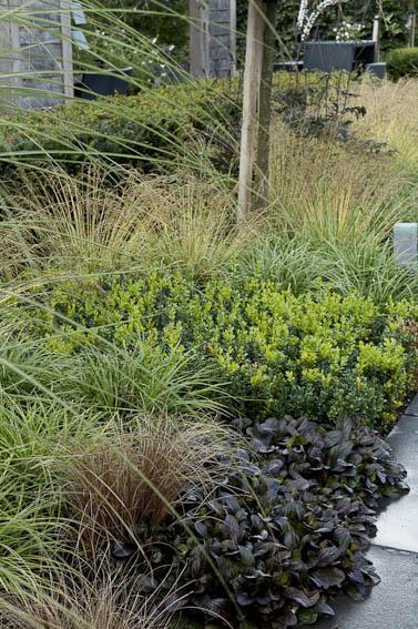 Plantes couvre sol coton aster sedum le magazine for Soldes plantes