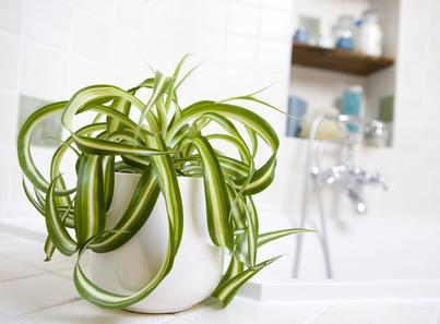 Choisir Ses Plantes Dintérieur En Fonction De La Pièce De La - Plante verte pour salle de bain