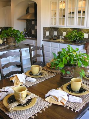 plantes d polluantes chlorophytum dracaena le magazine gamm vert. Black Bedroom Furniture Sets. Home Design Ideas