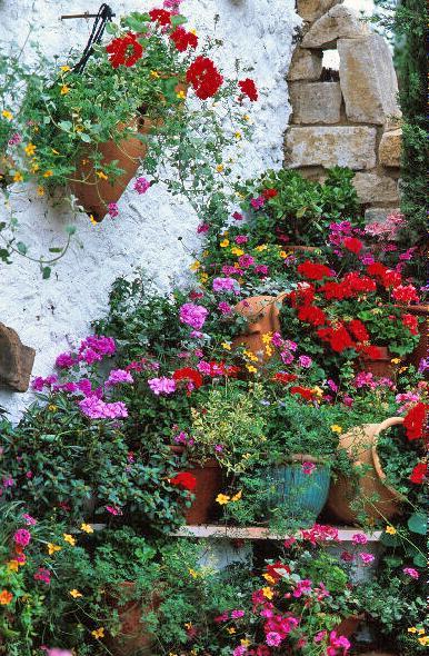 G raniums ou p lagoniums plantation entretien gamm vert - Quand rentrer les geraniums ...