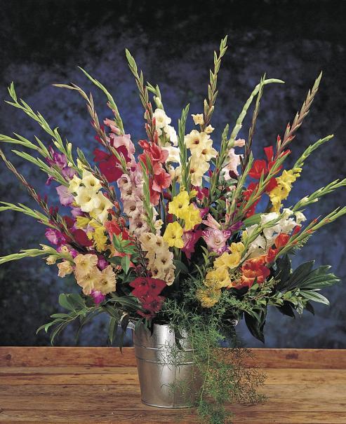 le gla eul une fleur d 39 t parfaite en bouquet comme au jardin gamm vert. Black Bedroom Furniture Sets. Home Design Ideas